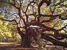 Stromy jsou z mnoha d�vod� u�ite�né, ale jsou také krásné. T�eba svými kv�ty,...