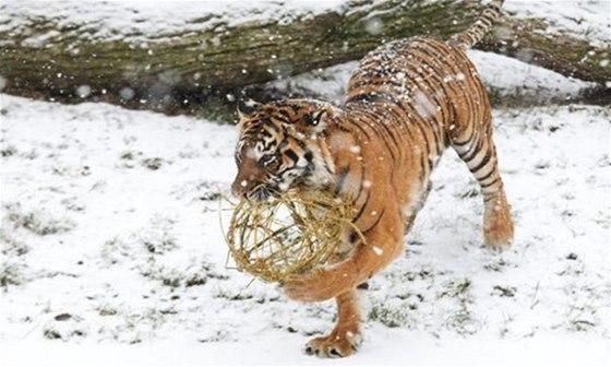 Advetní čas nabídne v zoologických zahradách program plný speciálních prohlídek, zdobení stromků a dárečků
