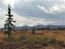 Pohled na vrcholky v národním parku Denali ze Stampede Trail