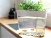 Akvárium m�ete mít v kuchyni, abyste m�li bylinky v�dy p�i ruce.