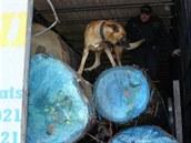 P�i odhalování nelegálních migrant� pomáhají �eským policist�m i psi.