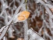 Ledovka v Za�ovicích poslední listopadový víkend