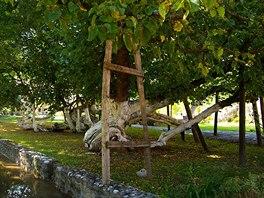 Nejstarším stromem vzahradách Patriarchálního kláštera vPeći je 800 let stará moruše.