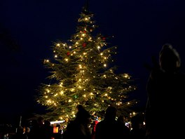 Vánoční strom v Zoo Praha letos rozsvítí hudebník a divadelník Jiří Suchý v neděli 10. listopadu v 16:00 u severního vchodu do zoo.