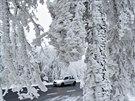 Aktuální fotografie z německého Hoher Meissner nedaleko Lichtenau severně od Frankfurtu zachycuje namrzlé stromy ve výšce 750 metrů nad mořem. Teplota se zde podle AP pohybuje okolo jednoho stupně pod nulou. (2. prosince 2014)