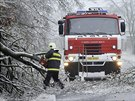 Těžká ledová námraza lámala větve i celé stromy na Třebíčsku. (2. prosince 2014)