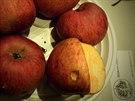 2 Bláhovo oranžové získává od roku 1954, kdy byla vyšlechtěna na Turnovsku, stále větší popularitu, díky dobré skladovatelnosti a chuti.