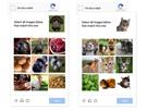 """Mobilní uživatelé v rámci nové reCAPTCHA vybírají """"všechny obrázky dole, které odpovídají tomu nahoře"""". Vyberete tedy například čtyři kočky v devíti obrázcích zvířat."""