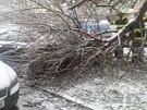 Hasiči měli v Olomouckém kraji během pondělní noci a v úterý desítky výjezdů ke spadlým stromům a větvím, které polámala vytvořená vrstva ledu.