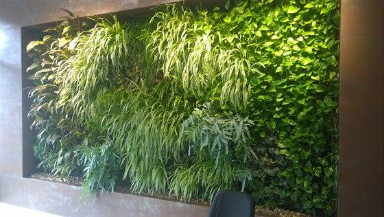 Zelené stěny – vertikální zahrady v interiéru