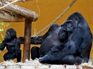 Moja (uprostřed) se svou malou Duni (vlevo) a samice Chelewa se svým mládětem