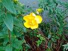 Prosincové jaro v Pardubicích