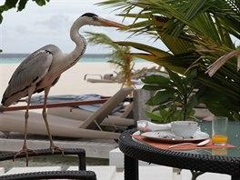 Luxusní komplex na Maledivách. Po večeři mezi rybkami na váš čeká snídaně mezi ptáky.