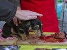 Fingované zabití psa. (21. prosince 2014)