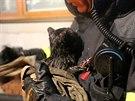 Požár rodinného domu v Dobrochově na Prostějovsku, při kterém hasiči zachránili kotě (28. prosince 2014).