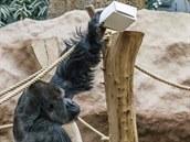 I gorily dárky milují. Zvláště ty jedlé, nebo skrývající něco k jídlu.