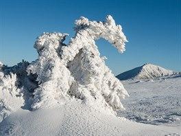 Sněžka od cesty k Luční Boudě